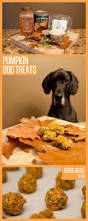 Using Pumpkin For Dog Constipation by 84 Best Fall Howloween And Thanksgiving Images On Pinterest Dog
