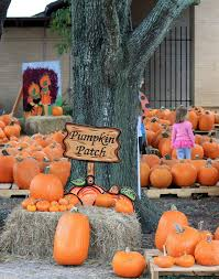 Pumpkin Patch Houston Oil Ranch by 59 Best Texas Images On Pinterest Alma Mater Madeleine And