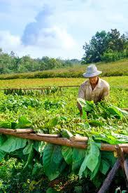 Horseback Riding Cigars In Vinales Cuba More At ExpertVagabond