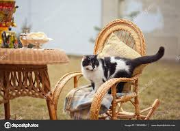 Cat On Rocking Chair — Stock Photo © Shevtsovy #136345504