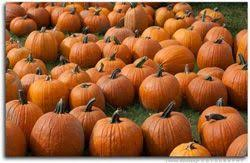 Tallahassee Pumpkin Patch by Christ Presbyterian Pumpkin Patch Fun 4 Tally Kids