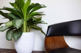 100 What Is Contemporary Interior Design The Use Of Plants In Modern Interior Design Benefits Tips