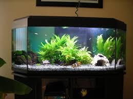mamzelle didounne76 mes aquariums 240l et 30l photos