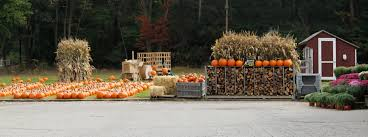West Produce Pumpkin Patch Fayetteville Nc by Ashley Farms Online