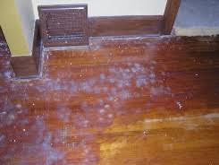 Applying Polyurethane To Hardwood Floors Youtube by Screening Hardwood Floors Recoating Hardwood Floors Mn