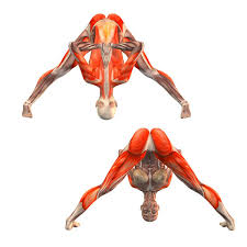 Wide Legged Forward Bend With Hands In Namaste