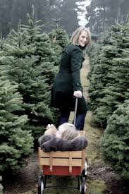 Christmas Tree Cutting Permits Colorado Springs by 447 Best C H R I S T M A S T R E E F A R M Images On Pinterest