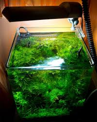 111 best Cube Aquascape Ideas images on Pinterest