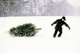 Christmas Tree Preservative Recipe Sugar by Non Toxic Christmas Tree Food