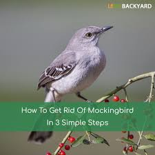 How To Get Rid Of Mockingbirds In 3 Simple Steps (Dec, 2017) How To Keep Mosquitoes Away Geting Rid Of Five Tips For Getting Bugs And Pests On Your Patio Youtube To Get Chiggers Skin Body Yard Symptoms Fast Crawly Catures In My Backyard Alberta Home Gardening 25 Unique Rid Spiders Ideas Pinterest Kill Off Bug Control I Repellent Spiders Spider Spray Sprays Cutter 16 Oz Outdoor Foggerhg957044 The Of Time Tested Bob Vila Pictures With Japanese Beetles Garden Best Indoor Mosquito Killers Insect Cop