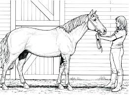 Horses Coloring Pages Printable Horse Picture Realistic