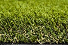 100 Canford Cliffs First Choice Grass
