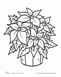 Preschool Holidays Seasons Worksheets Poinsettia Plant Coloring Page