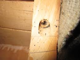 How to spot bedbug infested garbage