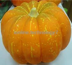 Carvable Foam Pumpkins Walmart by 9 Artificial Carvable Pumpkins Wholesale Funkins Logo