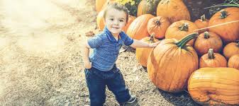 Pumpkin Patch Animal Farm In Moorpark California by Best Pumpkin Patches And Farms In Los Angeles Mommy Nearest