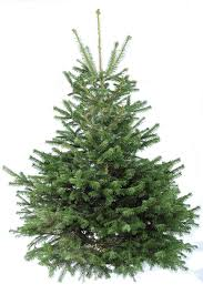 Fresh Christmas Trees Types by A Pallet Christmas Tree Buzzmills Christmas Ideas