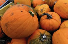 Highwood Pumpkin Fest Hours by Best Bets In The North Northwest Suburbs Oct 16 22 Park Ridge