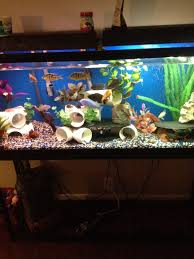 Star Wars Themed Aquarium Safe Decorations by 55 Gallon Cichlid Tank I Like The Diy Pvc Pipe And Slate