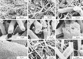 table d veil avec si e calcite moonmilk morphology and environment of formation in