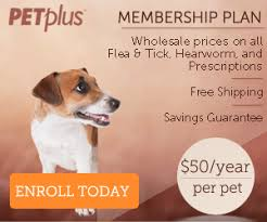 heartgard for cats heartgard plus vs heartgard for dogs petcarerx