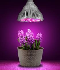 light bulb grow light bulbs for indoor plants higher intensity