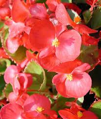 أنواع نباتات الظل اختاري مايناسب ذوقك 68.jpg
