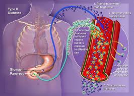 Tratamiento natural con nim (neem) para el control de la diabetes