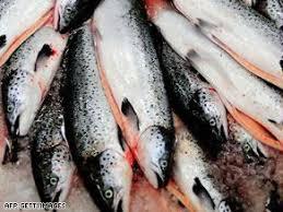 وطفلك0000000 st.salmon.jpg_-1_-1.